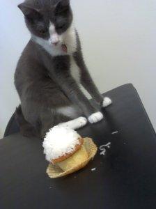 coconut cupcake cat