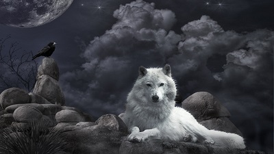 Wolf-raven