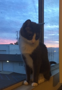 cat window dawn