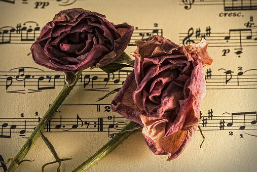Dead roses and music