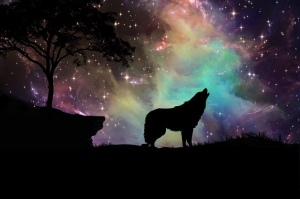 night sky stars colors wolf