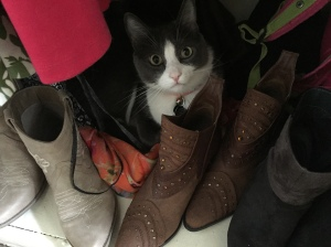 gatsby cat in closet with boots