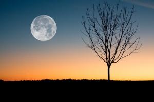 sunset moon tree