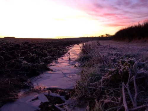 Cold purple dawn