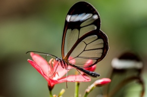 Transparent butterfly flower glass wing
