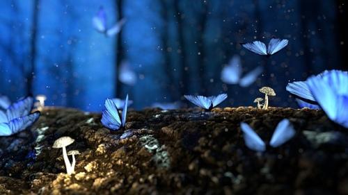 Blue butterflies at night
