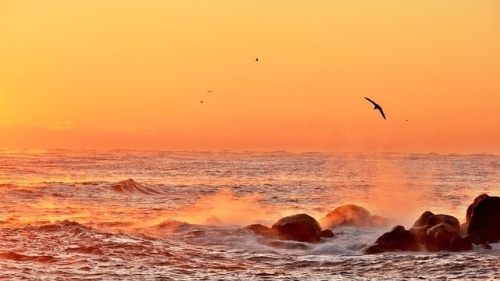 Bird flying in sunrise over ocean