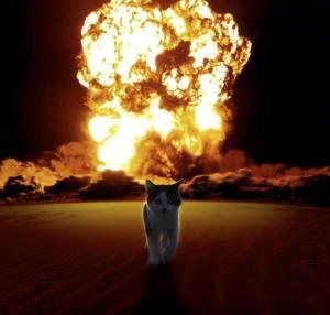 Cat walking away explosion fire