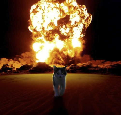 Cat walks away from explosion