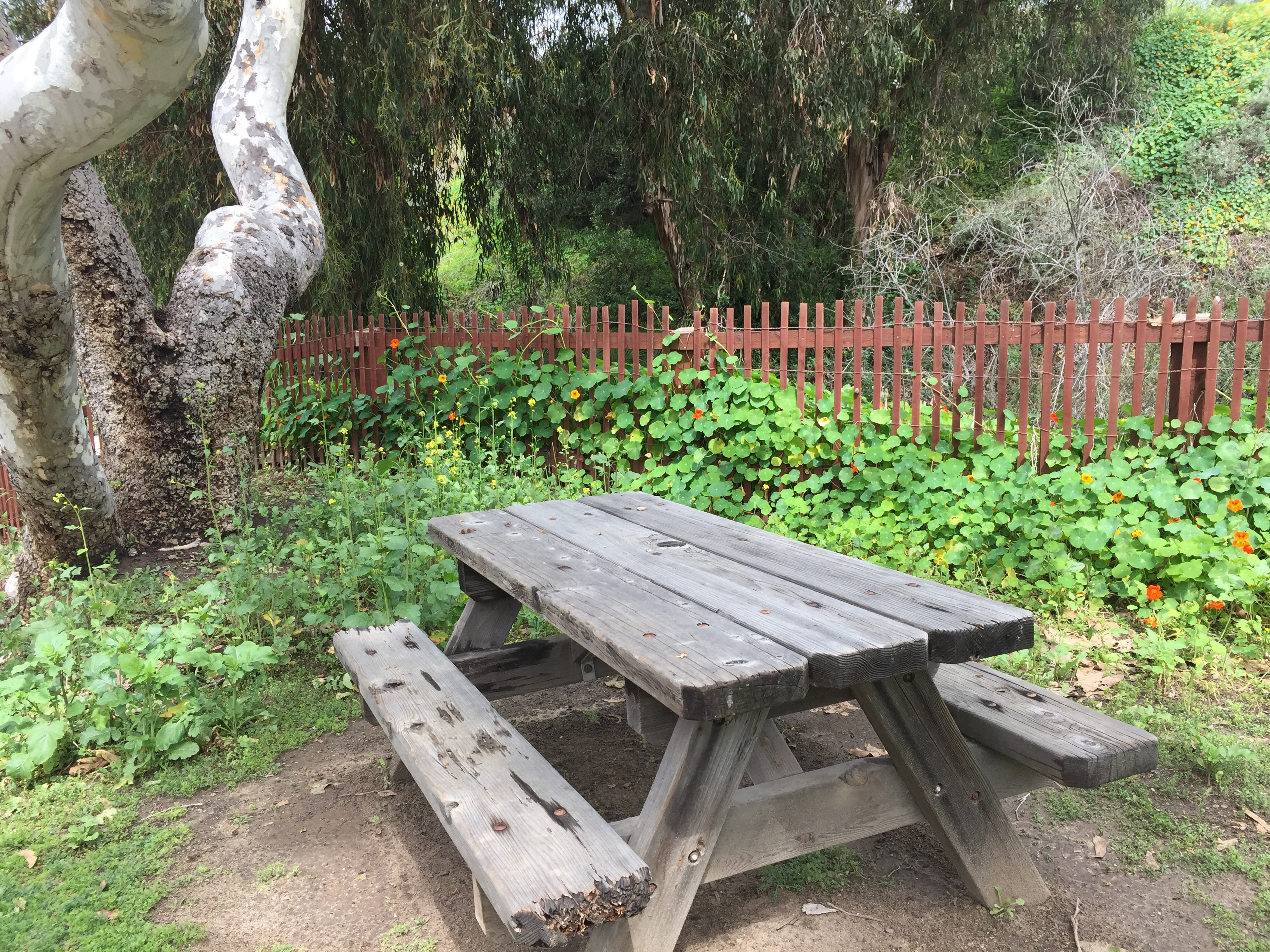 Crystal Cove picnic table