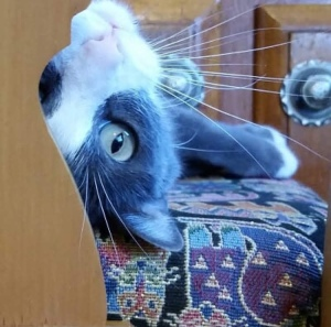 Cat upside down head
