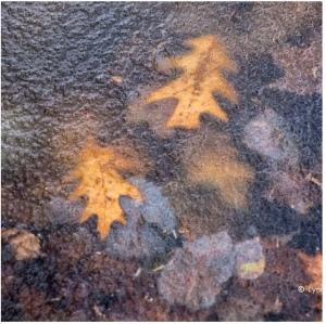 leaves frozen ice stones