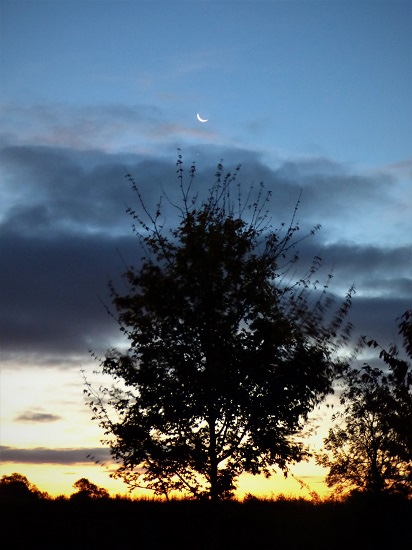 Tree clouds crescent moon