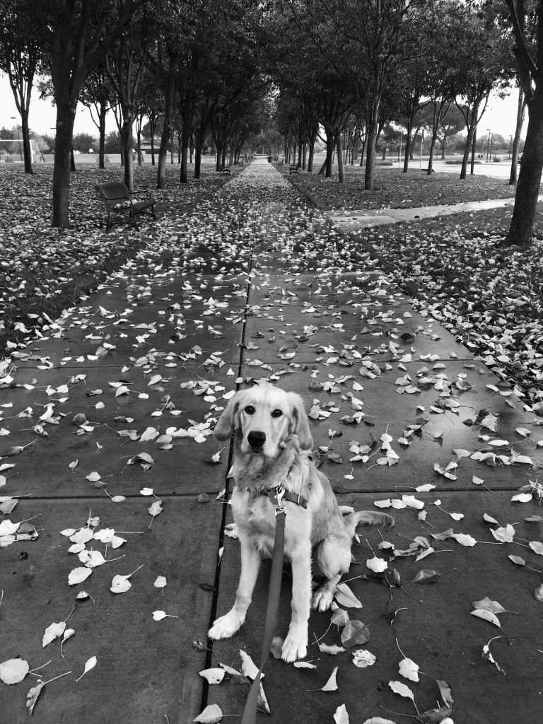 Doggie with leaves