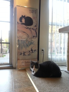 Kitty by the door