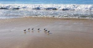 ocean wave sand birds