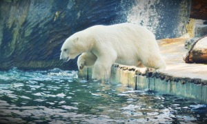 Bear splash pool water