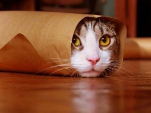 Kitty cat purrito