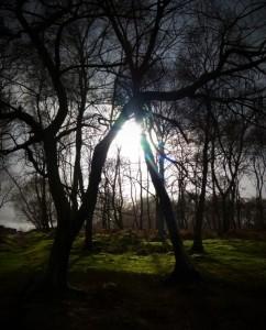 sun shining trees