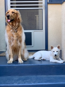Rory and Lily dogs doggies doggos