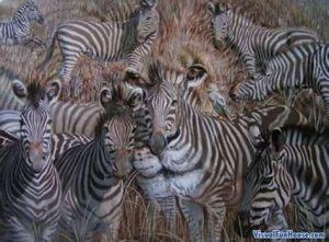 Lion zebras