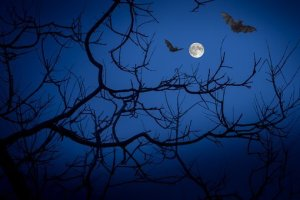 Bats and moin