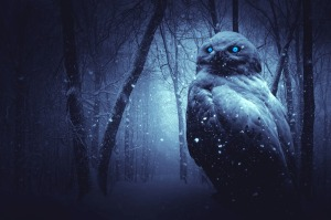 Spooky forest owl snow